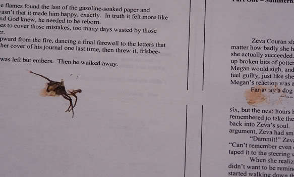 A manuscript page with a spider smashed on it