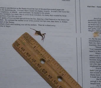 A manuscript page with a dead spider and a ruler showing the spider's size of almost an inch