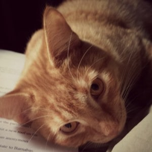 A ginger colored cat lies on a manuscript page looking at the camera