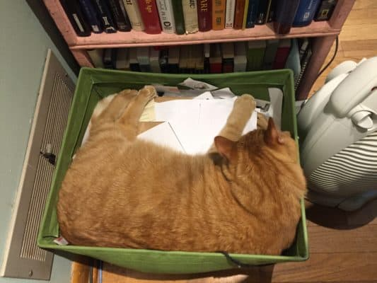 A picture of a ginger cat curled up inside a green basket of papers